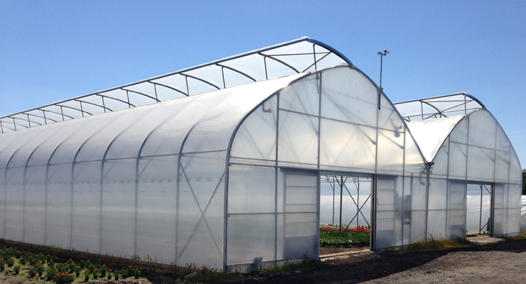 How-Can-ETFE-Greenhouse-Films-Help-To-Yield-Better-ROI