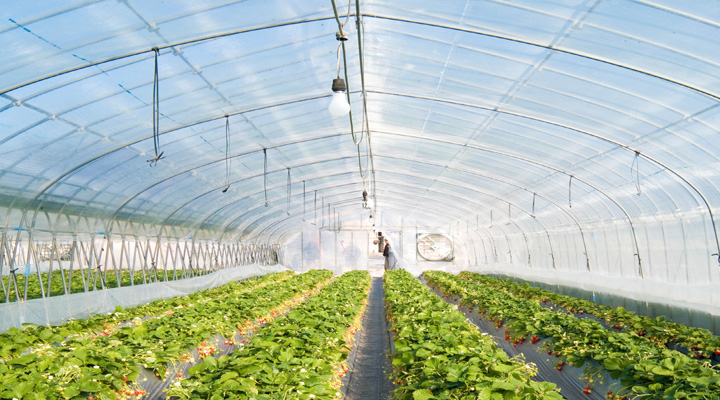benefits-of-polycarbonate-in-agriculture