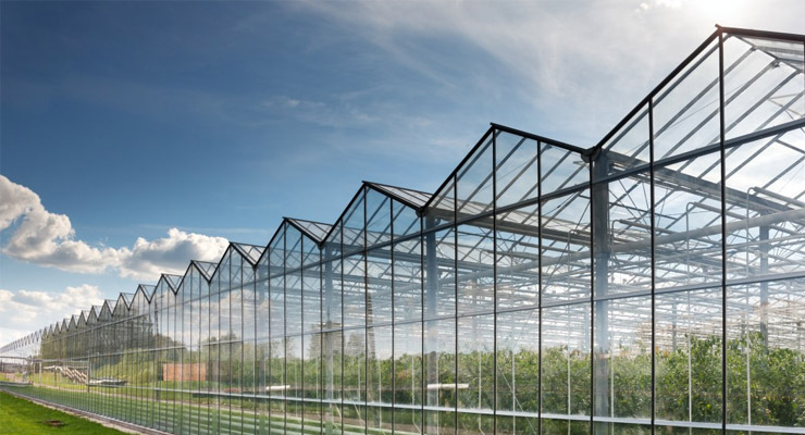 Why-Should-You-Install-Polycarbonate-Greenhouse-Panels